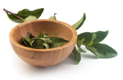 Tea branch and bowl with tea leaves Stock Photography