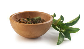 Tea branch with dried tea Royalty Free Stock Photo