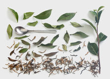 Tea branch and leaves with dried tea Stock Photo