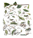 Tea branch and leaves with dried tea Stock Image