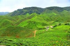 Cameron highland Malaysia. Tea at Cameron highland Malaysia royalty free stock photo