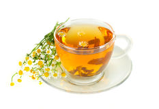 Tea with camomile Royalty Free Stock Photos