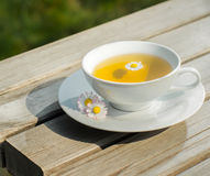 Tea camomile flower Stock Photos
