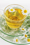 Tea of chamomile drug Royalty Free Stock Images