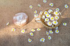 Tea, chamomile flowers in the sun, on sacking stock image