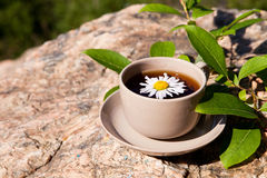 Tea with chamomile on old big stone. Royalty Free Stock Photography