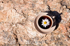 Tea with chamomile on old big stone. Stock Photo