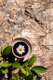 Tea with chamomile on old big stone. Stock Photography