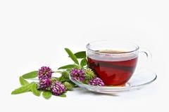 Tea with clover flower Stock Photo