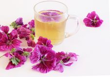 Tea or a cold-prepared macerate of flowers Malva mauritiana. The actual coloring that causes the plant dyes in response. Tea or a cold-prepared macerate of Royalty Free Stock Image