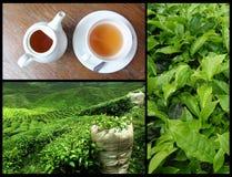 Tea collage Stock Photo