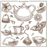 Tea collection vector sketch icons of cups, teapot and teabags or herbal flavorings. Tea collection and herbal flavorings sketch vector icons. Isolated set of Royalty Free Stock Photos