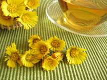 Tea with coltsfoot Stock Image