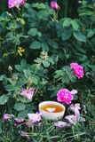 Tea in country style in summer garden stock photos