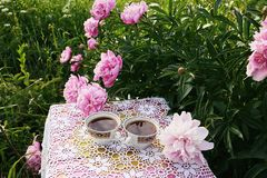 Tea in country style in summer garden in the village. Two cups of black tea on crocheted vintage lacy tablecloth and blooming. Tea in country style in summer royalty free stock image