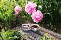 Tea in country style in summer garden in the village. Two cups of black tea on wooden boards and blooming peony flowers in. Tea in country style in summer garden stock photo