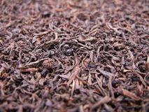 Tea crop Royalty Free Stock Photography