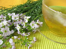 Tea with cuckoo flower Stock Photography