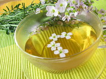 Tea with cuckoo flower Royalty Free Stock Photo