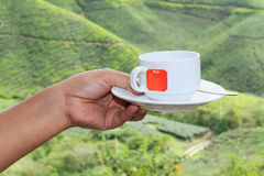 Tea cup. With tea plantation background Stock Photography