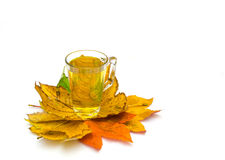 Tea cup with autumn leaves Royalty Free Stock Photo