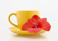 Tea cup with flower on a white background Royalty Free Stock Image