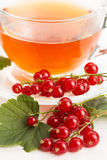 Tea in cup and fresh currant Royalty Free Stock Photography