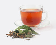 Tea cup with fresh and dried tea leaves Royalty Free Stock Photo