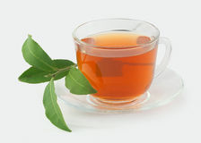Tea cup with fresh green branch Royalty Free Stock Image