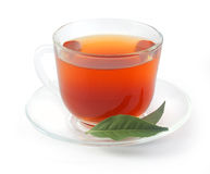 Tea cup with fresh green branch Royalty Free Stock Images