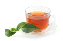 Tea cup with fresh green branch Stock Photography