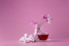 Tea cup with marshmallow Stock Images