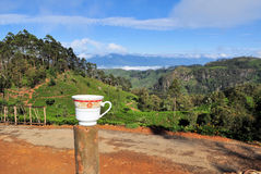 Tea cup plantation nature landscape in Sri Lanka Stock Images