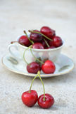 Tea cup of ripe cherries Stock Photography