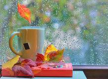 Tea cup at the window with  leaves and drops Royalty Free Stock Photography