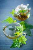 Tea with currant leaves Royalty Free Stock Photos