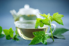 Tea with currant leaves Royalty Free Stock Images