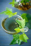 Tea with currant leaves Stock Photos