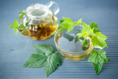 Tea with currant leaves Stock Images