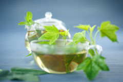 Tea with currant leaves Royalty Free Stock Image