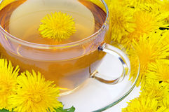 Tea dandelion Stock Photo