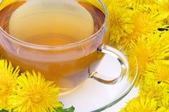 Tea dandelion Stock Image