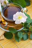 Tea with dog-rose Stock Photo