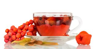 Tea from a dogrose and bunch of mountain ash isolated on white. Background Stock Image