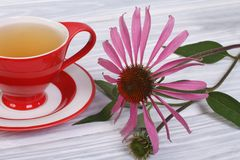 Tea with Echinacea Royalty Free Stock Image