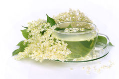 Tea elder flower Stock Image