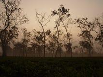 Tea estate. Srimangal tea estate in mist, Bangladesh Stock Photo