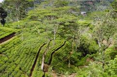 Tea estate and factory in Sri Lanka Royalty Free Stock Image