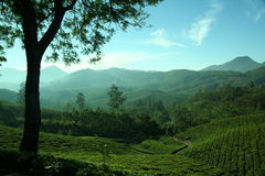 Tea estate at a glance Royalty Free Stock Photography