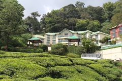 Tea Estate with house. Tea gardens with colorful wild flowers, with house stock images